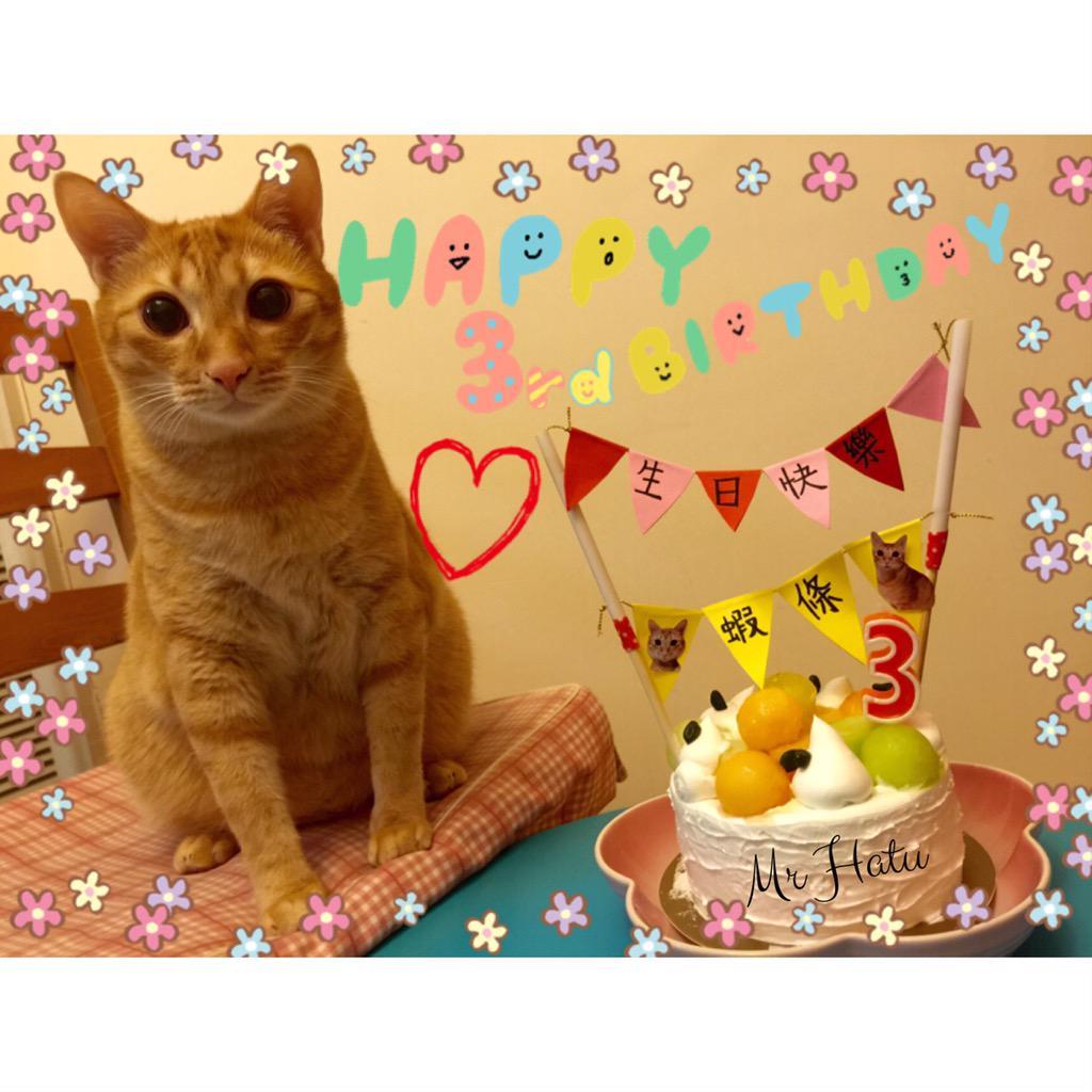 "Birthday Orange Cat: Mr Hatu On Twitter: ""It's My Birthday Today"