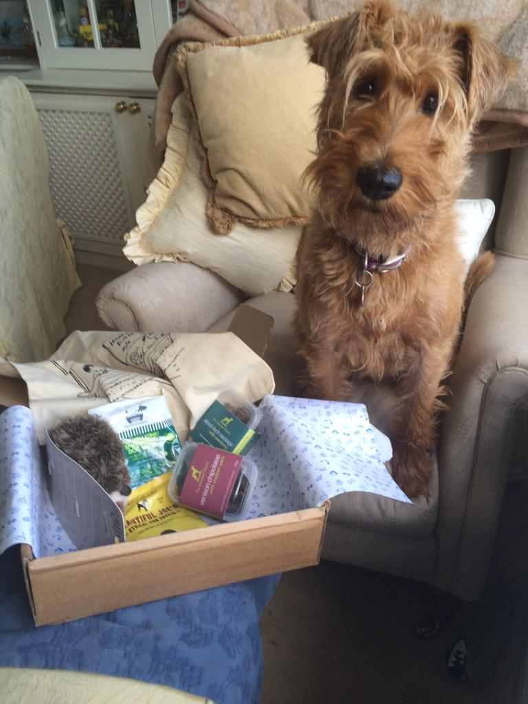 Hurrah my September box has arrived. *pleading eyes* but please open the treat packets, Mum #pawpost http://t.co/Lfe9jzqBRv