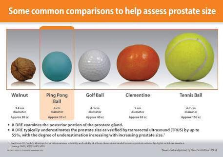 Size Of Normal Prostate