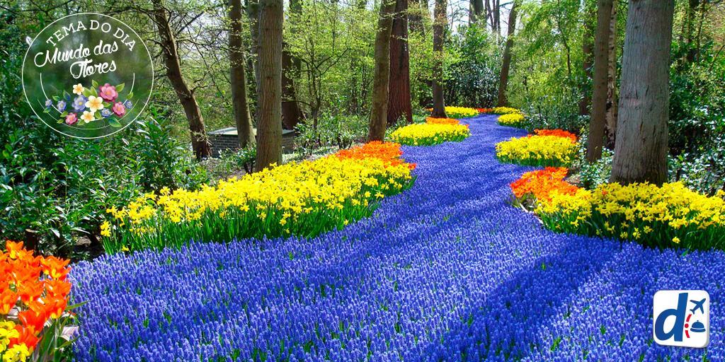 Holanda é Popular Por Suas Lindas Paisagens Cheias Flores