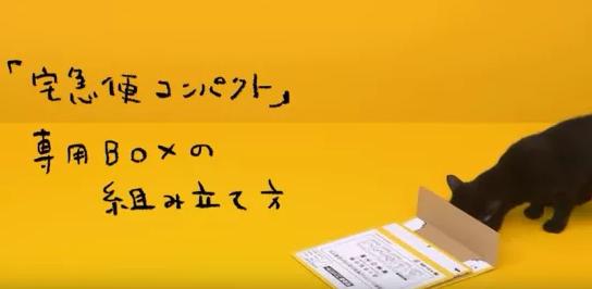 〘話題〙クロネコが宅急便を詰めている動画が激カワmebaeru-news.blog.jp/archives/43036…動画はこちら↑ pic.twitter.com/bL4D6bCJ2M