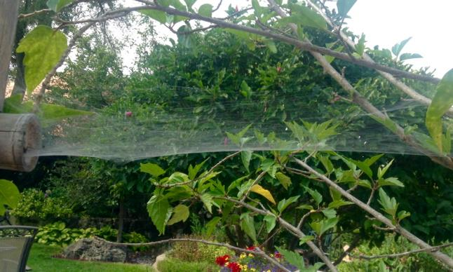spider web strung horizontally with bushes in background