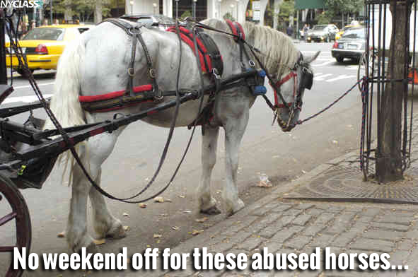 Carriage horses don't get the long weekend off. We need to #BanHorseCarriages http://t.co/bke5yahH8y