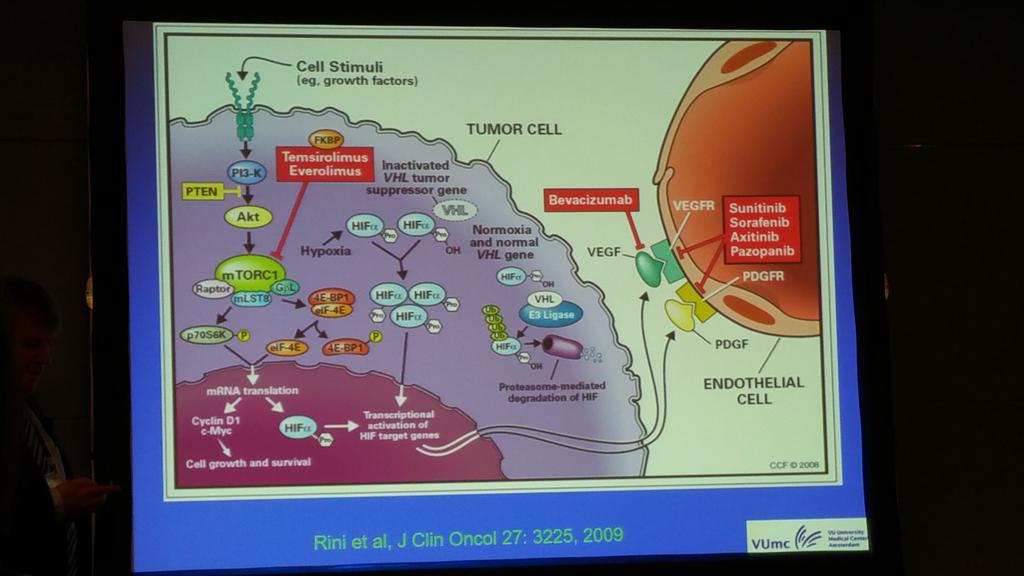 Helpful diagram: systemic therapies for advanced RCC. #examgold #eurep15 http://t.co/5XhaUVltIn