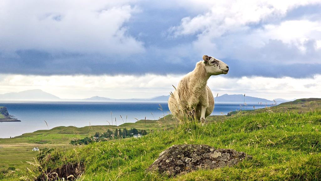 A #country lass preening for the camera on the Isle of Skye #FriFotos #Scotland http://t.co/J92fxdpqcB