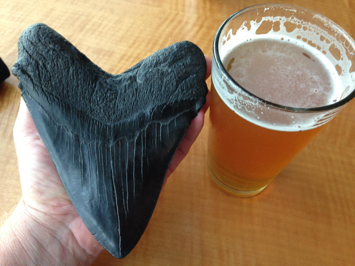 Carbon dating megalodon tooth washes 1