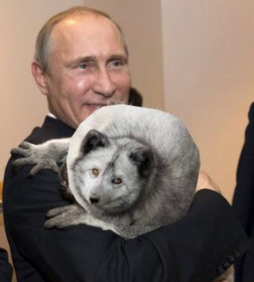 Путину не нравятся изменения в Конституцию Украины: хочет согласования с боевиками - Цензор.НЕТ 5086