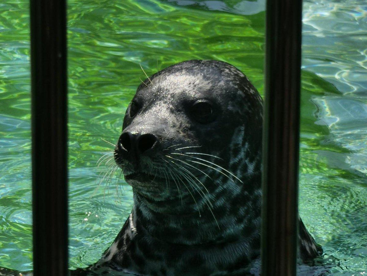 ♪あーざーらしーいーあーさが来たー♪上野動物園開園です! pic.twitter.com/3lHT9gRYRq