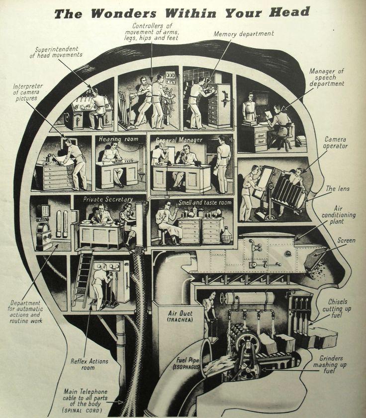 1938 infographic: The wonders inside your head http://t.co/jA3zLVT1gV http://t.co/1vTfFXw3fD