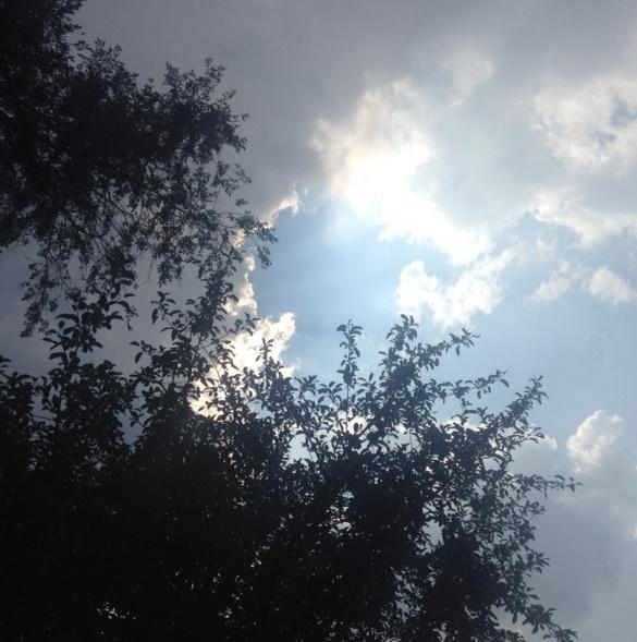 sky and clouds with tree branches in foreground