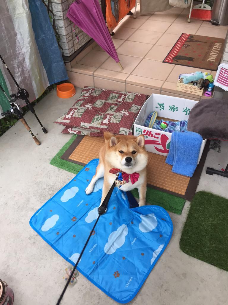 散歩行かないってば〜と、今  雨やんでるってば〜の攻防戦。(○・∀・)ノ マイド!! pic.twitter.com/tGTRNS7GSy
