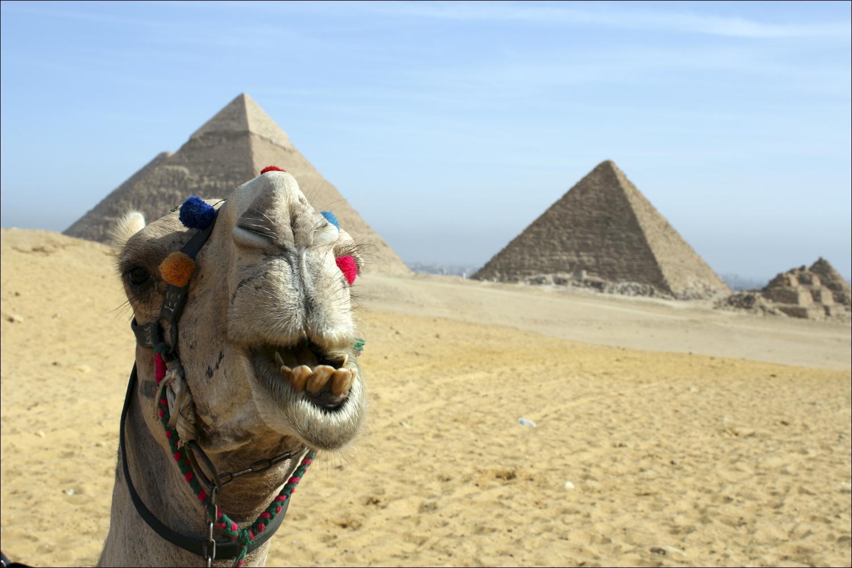 Египет картинки смешные
