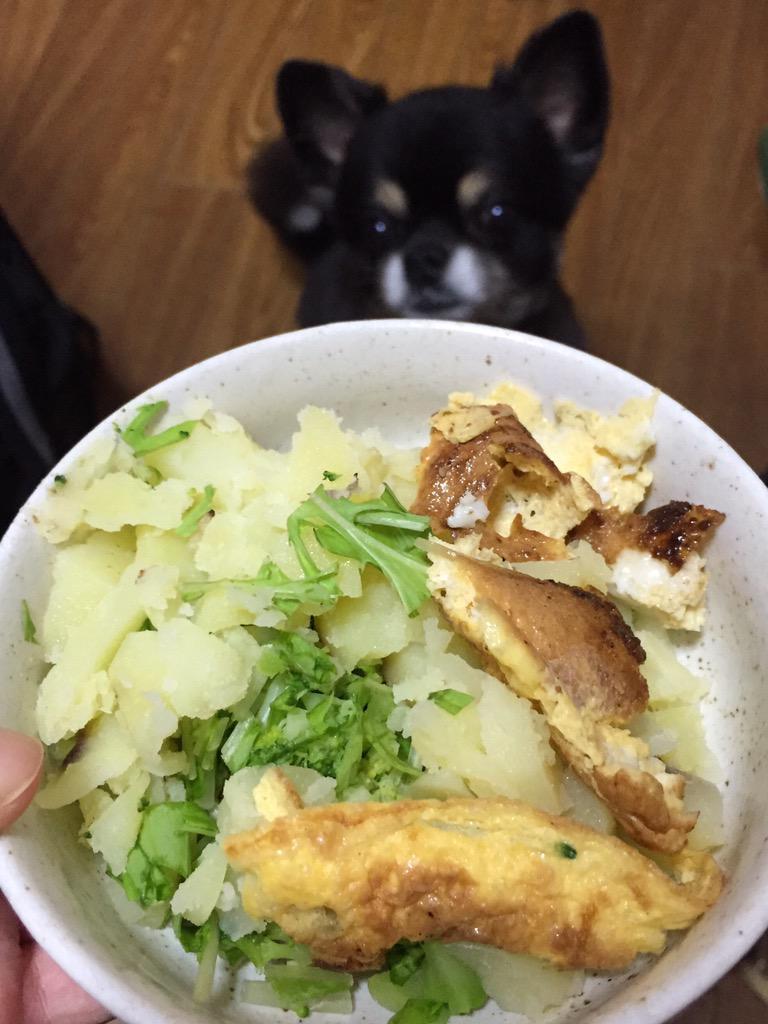 相方は今日の昼に帰ったのですが、ご飯を作り置いてくれました。わしのも、ムクチのも。むっちゃおいしい。あいつ、めっちゃええ奴やー。