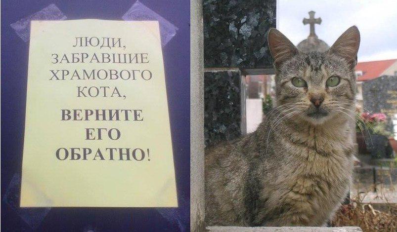 Заговор как вернуть кота
