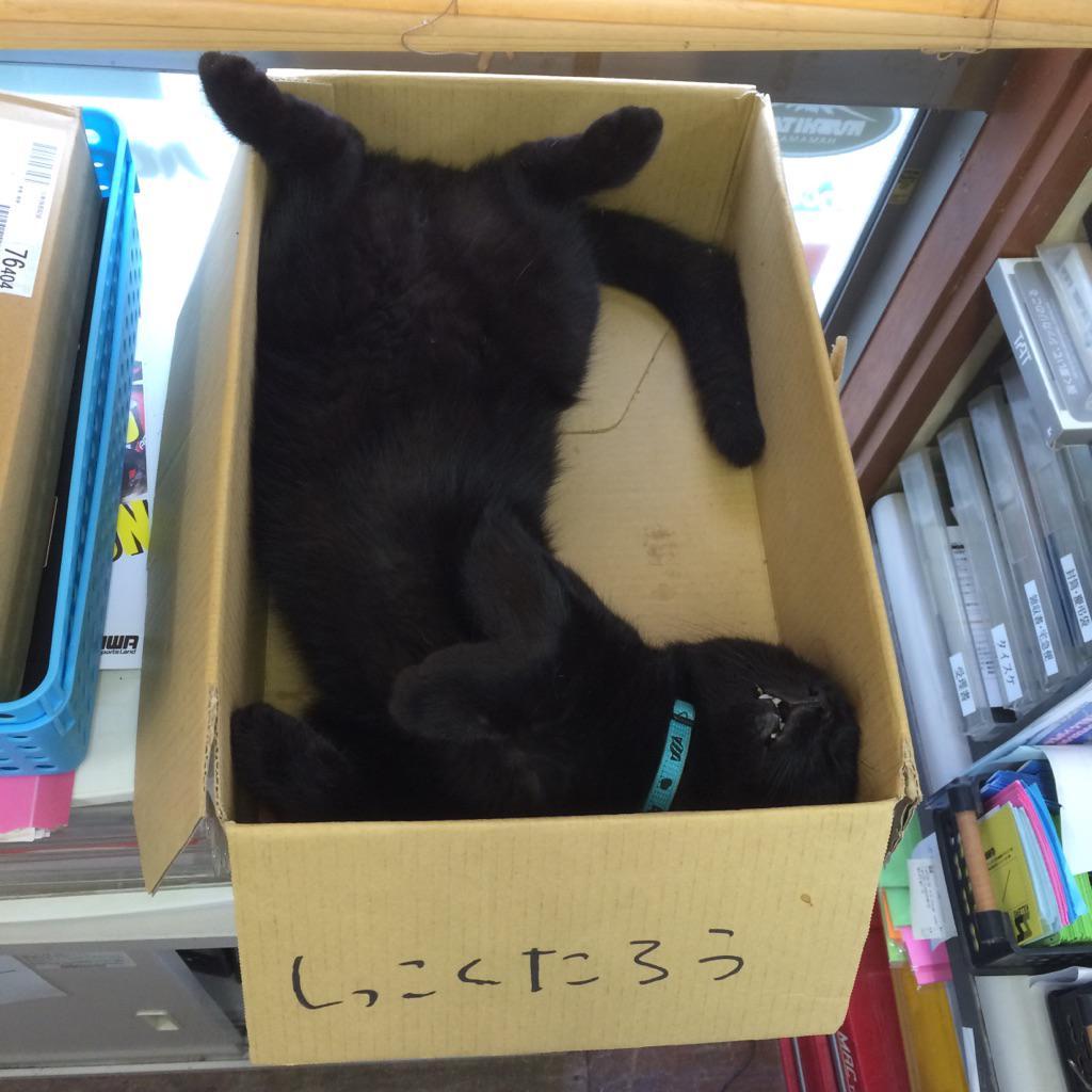 大きめの箱を満遍なくつかう理想的な寝姿 pic.twitter.com/ZNlyr7jUiP
