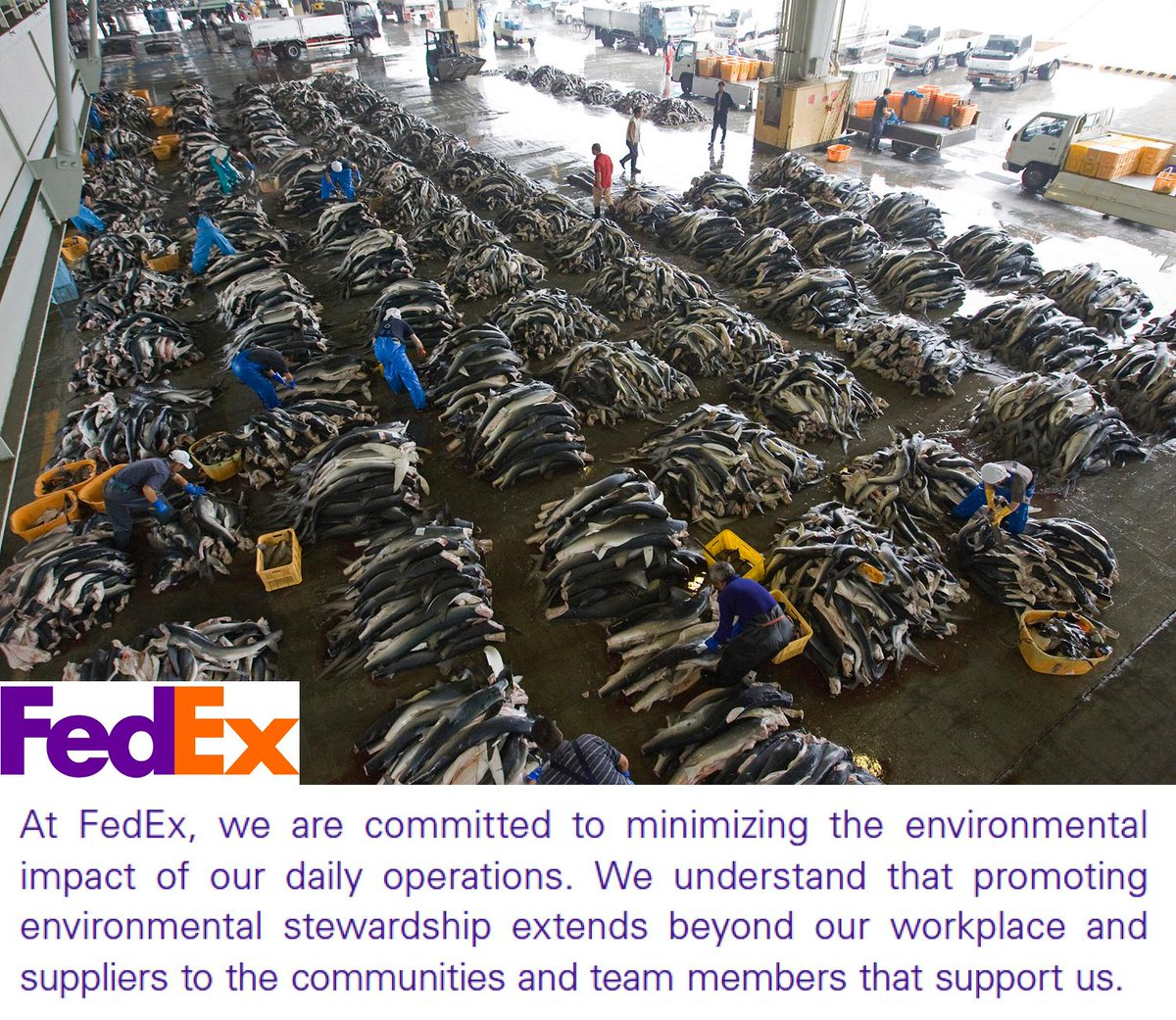 Pls RT > > Tell @FedEx to stop shipping shark fin! http://t.co/D5ReulcGey #shark http://t.co/AahLSZrzc3