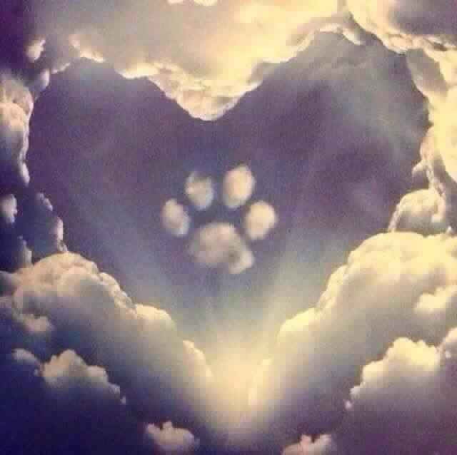 @ZombieSquadHQ @BonniedaWestie aw, feel sad about the loss. Wish you all the best. http://t.co/edVIdHjZNH