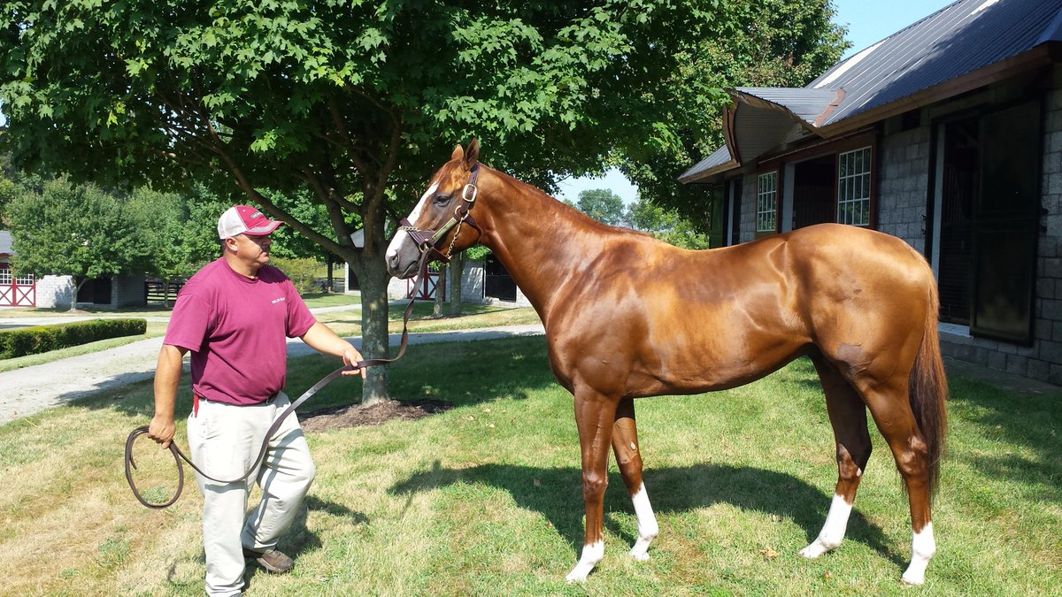 California Chrome looked fantastic this morning! More to come soon ... http://t.co/hl5amYlIzY