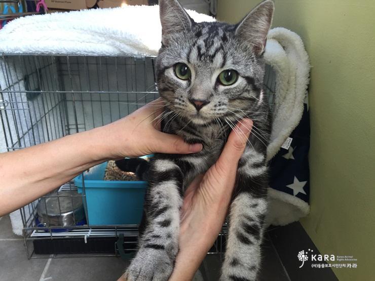 자동차 문만 열리면 올라타는 집 잃은 고양이가 애타게 보호자를 찾습니다. 송파구에서 발견되었습니다. 구청에 신고하여 공고를 내도록 하고, 현재 아이는 카라에서 보호중입니다. 이 글의 많은 공유를 부탁드립니다! http://t.co/r5oOQwKZdp