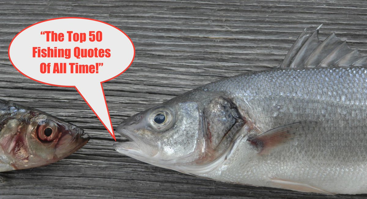 Salt Strong Fishing On Twitter 50 Inspiring Funny Fishing