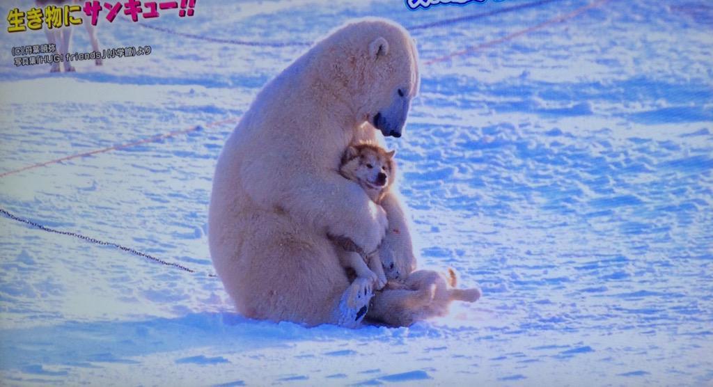 可愛かった(*´꒳`*)  ♡生き物にサンキュー http://t.co/tQGtw5IvNf