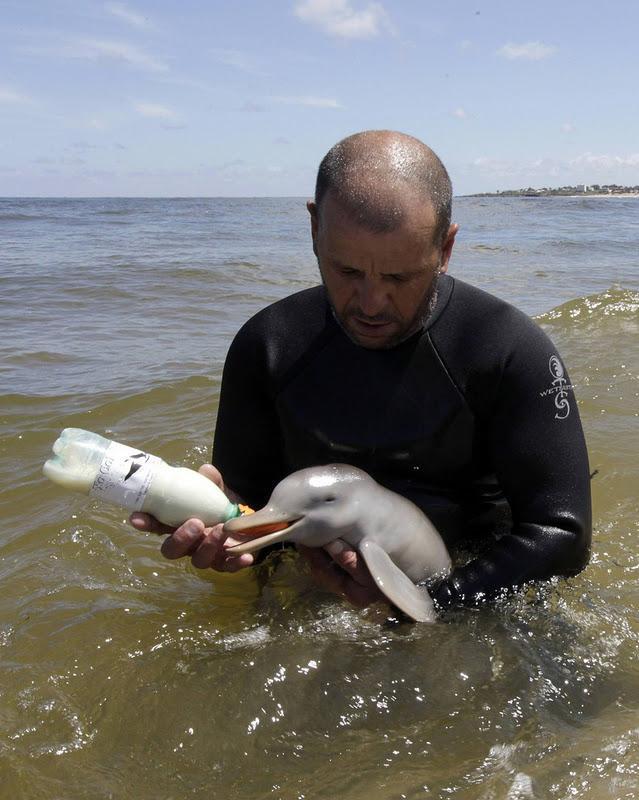 イルカの赤ちゃんが想像以上にかわいかった  feely.jp/2828/ pic.twitter.com/ntJ8X8CyBX