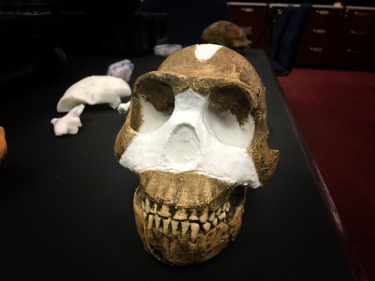 BREAKING: Scientists in SA have discovered a brand new species of human relative. Meet Homo Naledi! http://t.co/m3iB0kQVhy