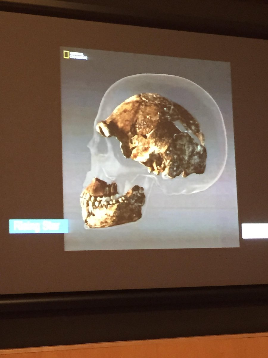 Here's the skull of Homo neladi shown inside a human skull. Brain is third size of ours #risingstarexpedition http://t.co/2N1l5TCjwT