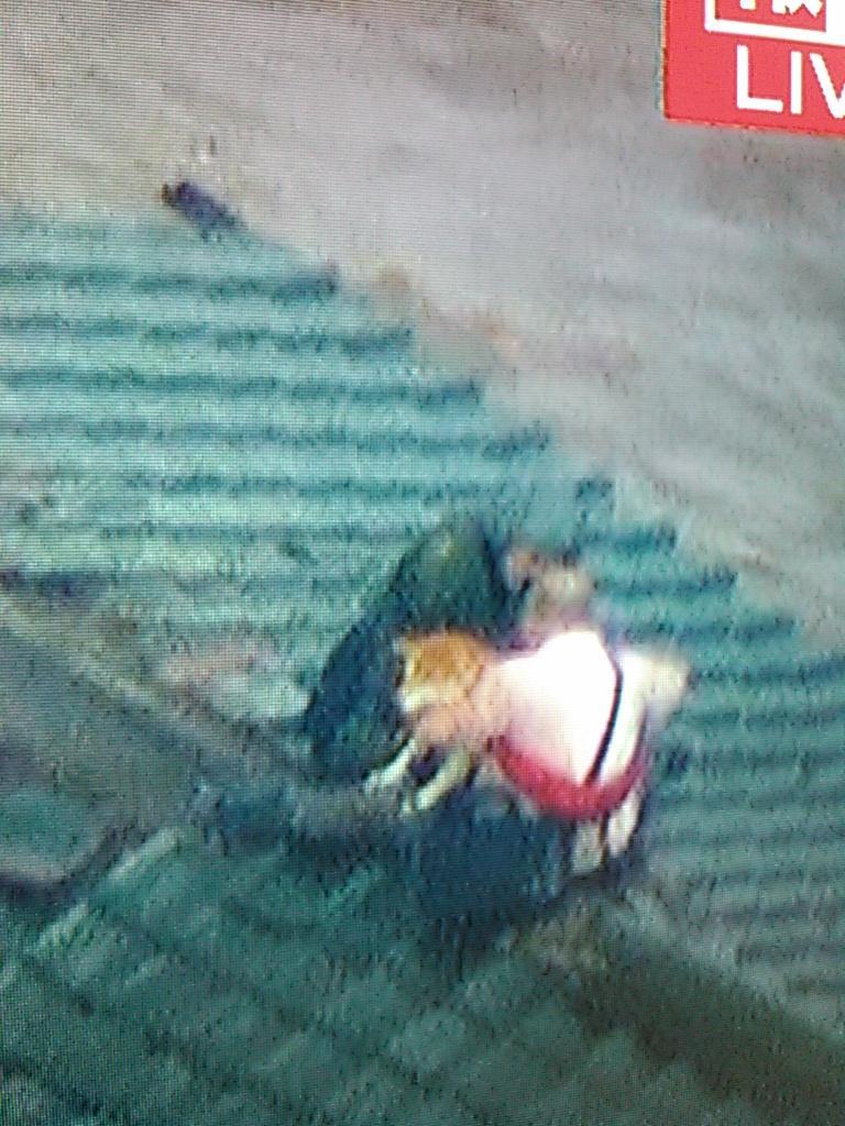 犬も助けた自衛隊の働きを忘れません。 RT @kasaimasatugu: 屋根の上にとりのこされたご夫婦と2匹の柴犬無事救助 自衛隊は犬を入れる袋をもって救助に来てくれた #鬼怒川  #決壊 #無事救助 #自衛隊 #柴犬 http://t.co/rsV2u40hJj