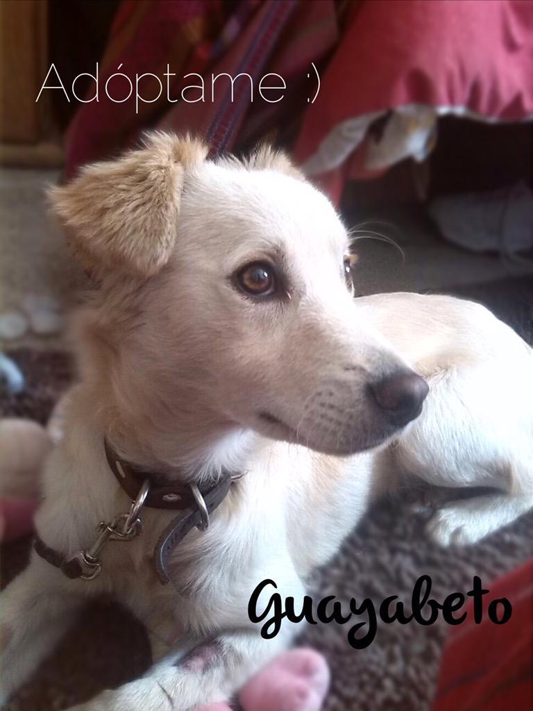 Ayúdenme a encontrarle casa y amor a Guayabeto \o/