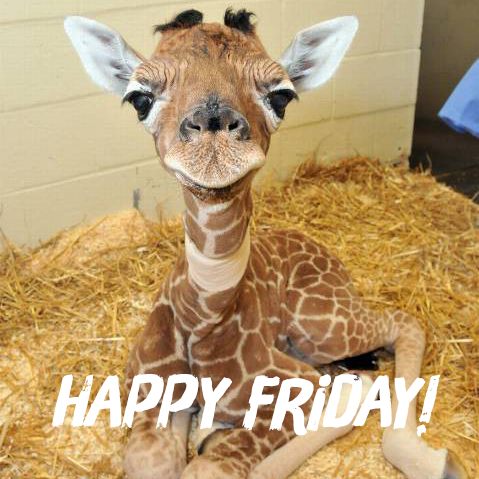 your life on twitter quothappy friday baby animals are