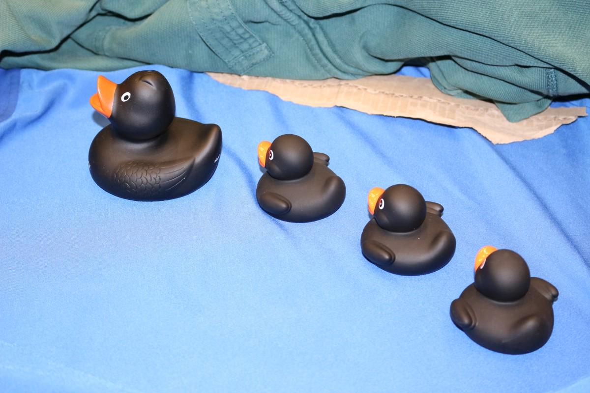 #44CON ops have their ducks in a row! http://t.co/u6tIY8l3Cu