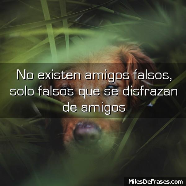 Frases Para Ti On Twitter No Existen Amigos Falsos