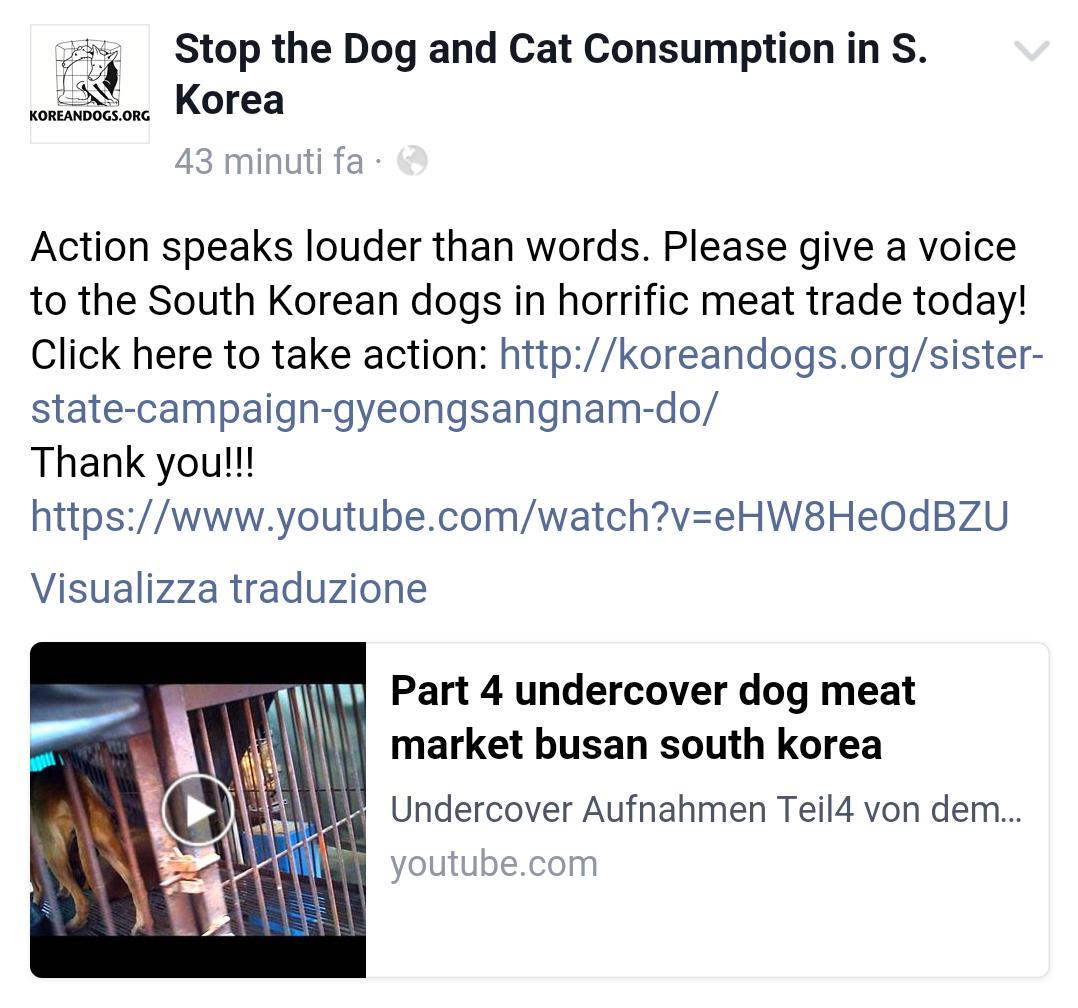 Tina D On Twitter Undercover Horrific Dog Meat Trade Busan