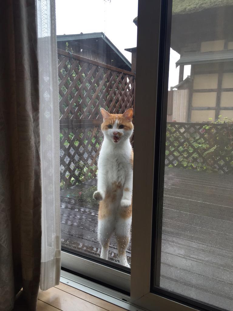 我が家のネコ様が脱走した直後に雨。そしてこの表情である pic.twitter.com/SZBZ2Z9sdd
