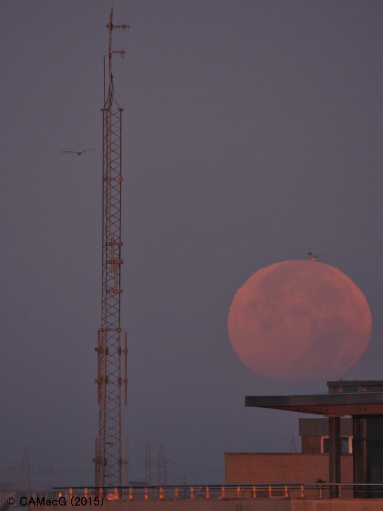 A seagulll hitches a lift on the setting #SuperBloodMoon over #Dublin, 28.09.2015 (2): http://t.co/uhh9blrc3g