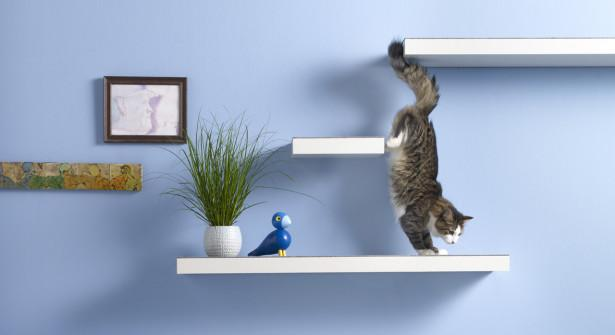 Et si on lui faisait un mur d'escalade ? Et hop, de l'exercice ;) http://t.co/PrQrx4nNuR #chat #DIY http://t.co/IkL5fzlLQ0