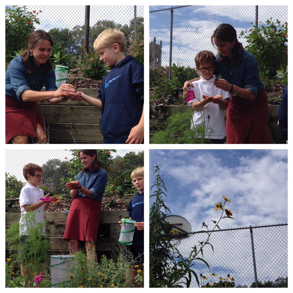 #catholicEdChat 2 tagged #monarch butterflies released http://t.co/tXo9CqW1HD
