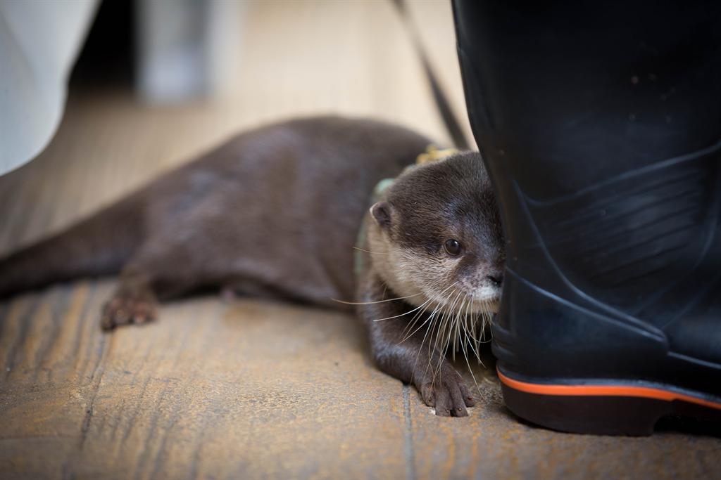 見てます。#サンシャイン水族館 pic.twitter.com/OkWzee2qf9