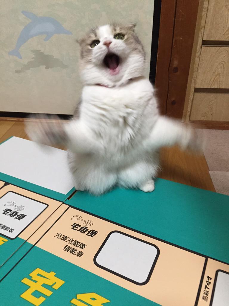 よっしゃーッ!!! pic.twitter.com/0daNOxch0S