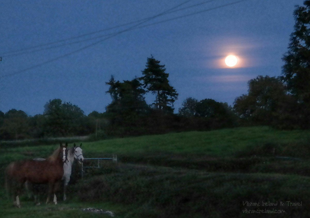 The #Supermoon is rising over Co Clare #Ireland as the horses watch. @barrabest @discoverirl @PictureIreland http://t.co/GzCTtjrFQR