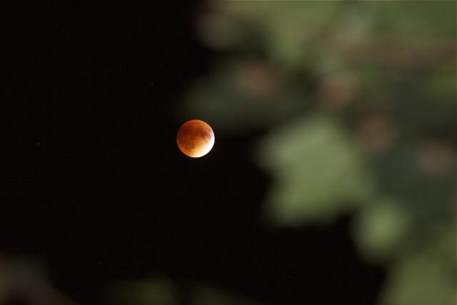 #SuperBloodMoon as seen from #AnnArbor's west side. #UmichEngin http://t.co/Mk2w2bhpR7