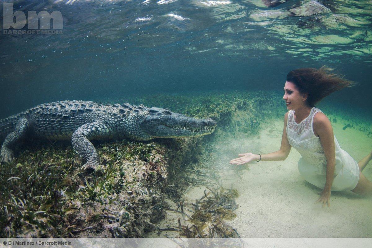 Italian daredevil Roberta Mancino comes face-to-face with a crocodile in the Gulf of Mexico.  ©Eli Martinez/Barcroft http://t.co/dYMWyQQeA1