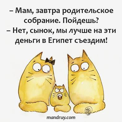 Яценюк против квотного принципа формирования Кабмина - Цензор.НЕТ 786