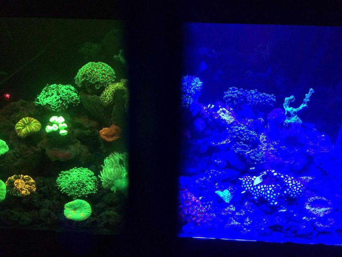 Callista On Twitter The Aquarium Tank Lit By Blue Light Viewed