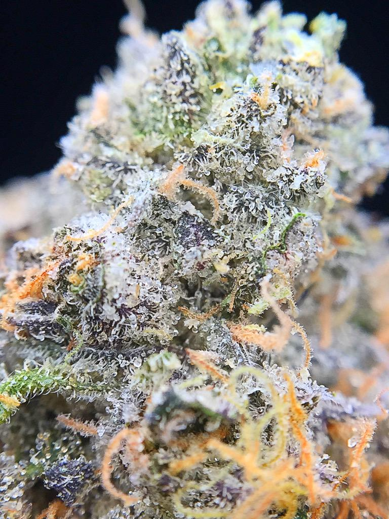 Gelato 33 semillas feminizadas de marihuana seeds