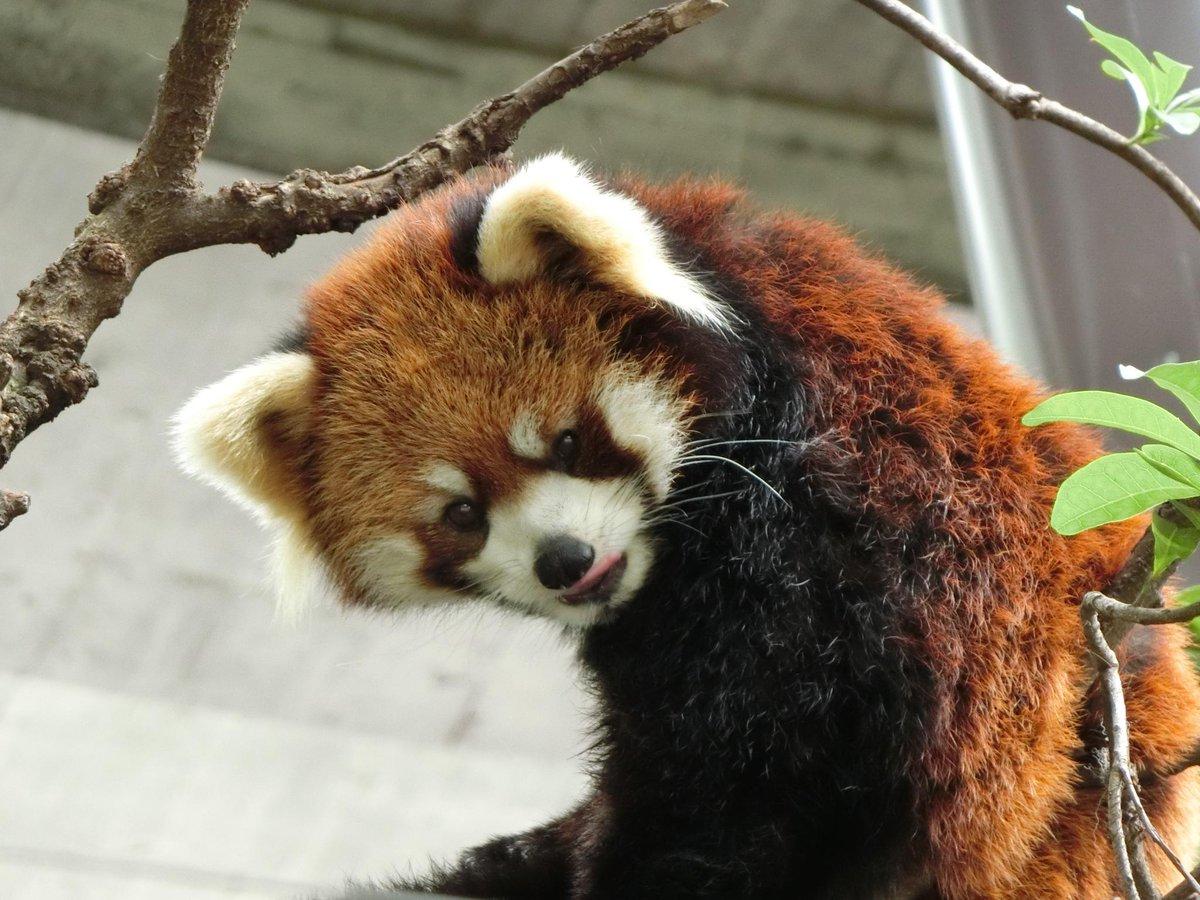 上野動物園開園です!本日9月17日は「キュー(9)ト(十)な(7)」でキュートな日!!みたいです。キュートな動物の姿を探しに来ませんかヽ(❤´д`❤)ノ pic.twitter.com/3zqnHcNfAy