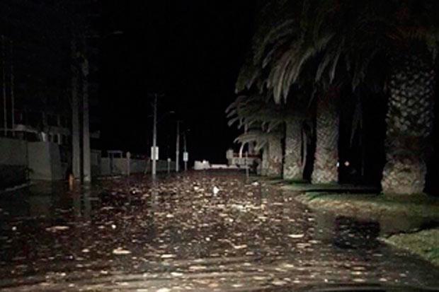 Onde anomale di tsunami dopo terremoto in Cile M8,3 del 16/17 settembre 2015.