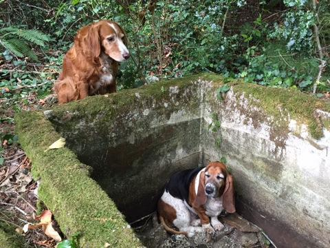 Hero Dog Stood Guard Over Her Trapped Friend For A Week Before They Were Rescued