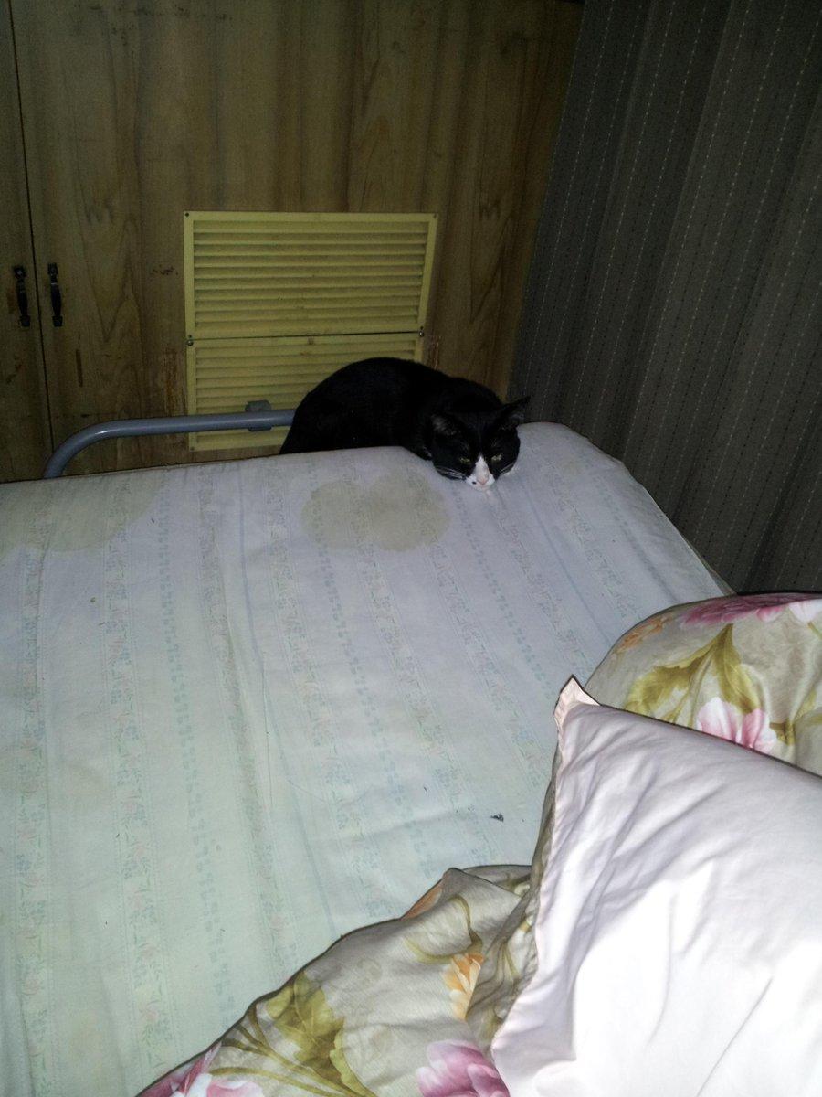 #国会が緊迫しているがウチの猫を見てくれ 父撮影。 http://t.co/pmYxByK1BJ
